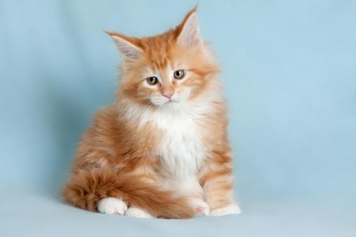子猫「Portrait of sweet pet cat」:スマホ壁紙(9)