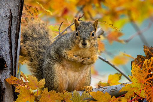 Squirrel「Portrait of a squirrel, Colorado, USA」:スマホ壁紙(12)