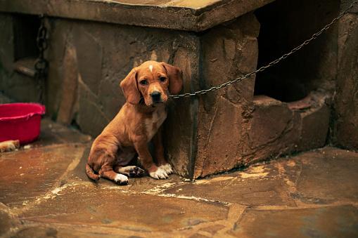 Sadness「Portrait of a sad puppy tied」:スマホ壁紙(8)