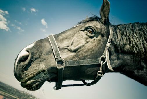 Stallion「Portrait of Black Horse」:スマホ壁紙(7)