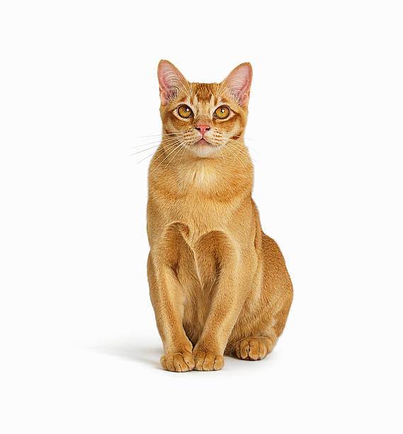 Portrait of cat:スマホ壁紙(壁紙.com)