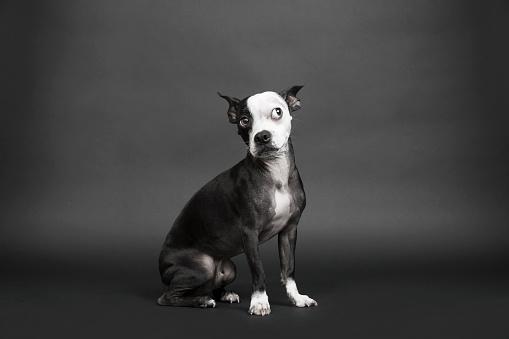 Curiosity「Portrait of dog looking away」:スマホ壁紙(15)