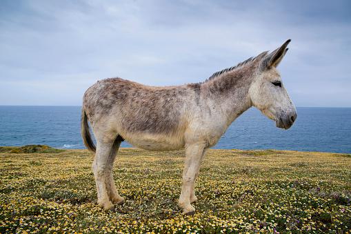 Cádiz「Portrait of a donkey standing in field, Tarifa, Cadiz, Andalucia, Spain」:スマホ壁紙(7)