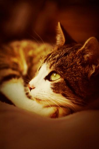 Mixed-Breed Cat「portrait of cat」:スマホ壁紙(4)