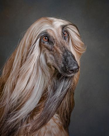 Animal Themes「Portrait of dog」:スマホ壁紙(19)