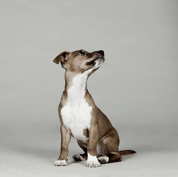 Portrait of dog looking up:スマホ壁紙(壁紙.com)