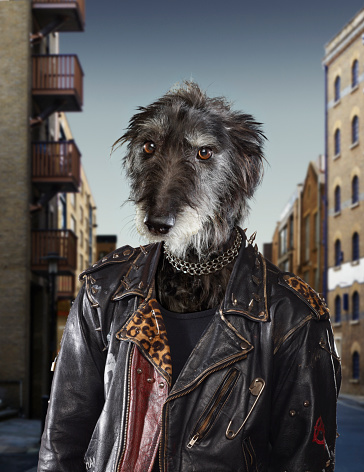 Leather Jacket「Portrait of a dog dressed as a Rebel」:スマホ壁紙(11)