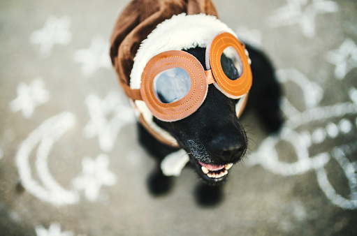 Flying Goggles「Portrait of black dog wearing flying goggles and hat」:スマホ壁紙(15)