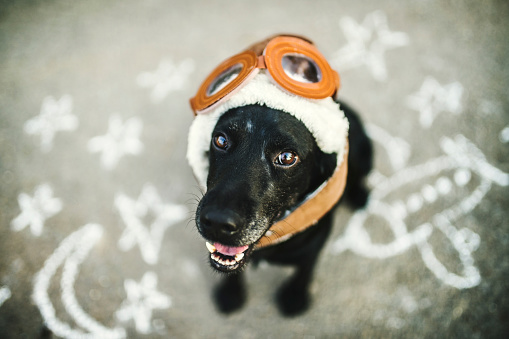 Flying Goggles「Portrait of black dog wearing flying goggles and hat」:スマホ壁紙(14)