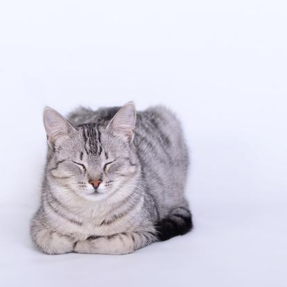 座る「寝室猫のポートレート」:スマホ壁紙(8)