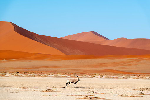 Namibia「Lone Oryx and the Sossus Dunes, Namibia」:スマホ壁紙(2)