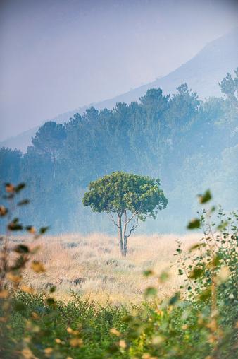 Beauty In Nature「霧の中で孤独な木」:スマホ壁紙(5)
