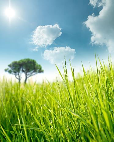 Rolling Landscape「Lonely tree on a sunny green meadow」:スマホ壁紙(10)