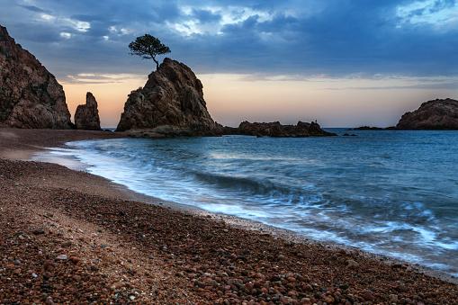 波「夕方には岩の上の孤独な木」:スマホ壁紙(3)