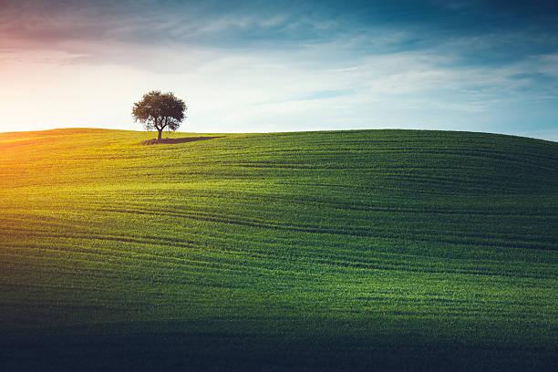 Lonely Tree In Tuscany:スマホ壁紙(壁紙.com)