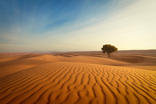 Sand Dune「lonely tree in the desert of oman」:スマホ壁紙(4)