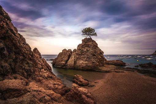 Symbols Of Peace「Lonely Tree at Tossa de Mar on sunrise」:スマホ壁紙(6)