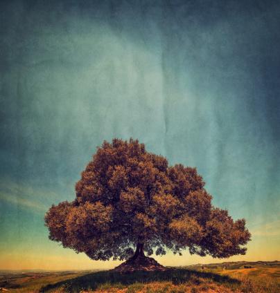 自然美「Lonely Tree」:スマホ壁紙(19)