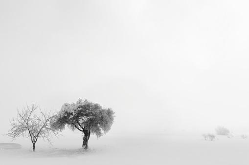 雪「Lonely tree の雪」:スマホ壁紙(10)