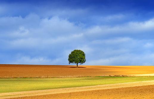 飽和色「lonely tree in golden autumn light」:スマホ壁紙(4)