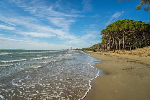 Pine Woodland「The beach near the town of Follonica」:スマホ壁紙(17)