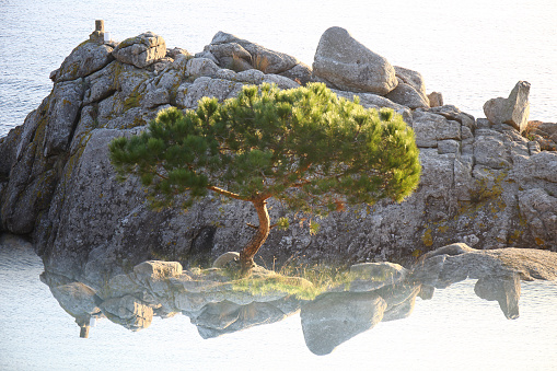 Single Tree「Spain, Cala S'Alguer, Costa Brava, single pine tree in front of a rock」:スマホ壁紙(1)