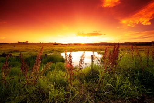Outback「Warm glowing field」:スマホ壁紙(19)