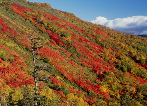 Kamikawa District - Ishikari「Autumn Leaves of Mount Akadake and Ginsendai, Kamikawa, Hokkaido, Japan」:スマホ壁紙(5)