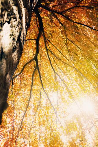 月「日光に対して紅葉」:スマホ壁紙(3)