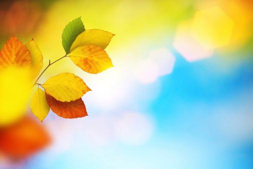 秋「秋の落ち葉」:スマホ壁紙(10)