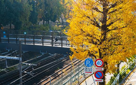紅葉「Autumn leaves Ginkgo trees stand along the JR railway track beside the pedestrian bridge that step over the railway at Harajuku Jingumae Shibuya Tokyo Japan on November 26 2017.」:スマホ壁紙(7)