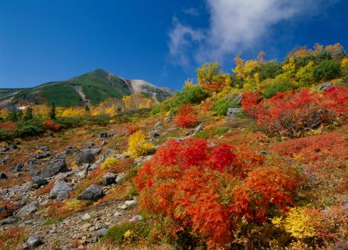 Low Angle View「Autumn Leaves, Matsumoto, Nagano, Japan」:スマホ壁紙(17)