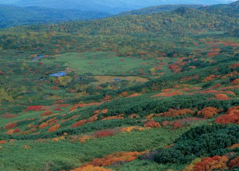 Kamikawa District - Ishikari「Autumn Leaves at Mount Asahidake, Higashikawa, Hokkaido, Japan」:スマホ壁紙(10)