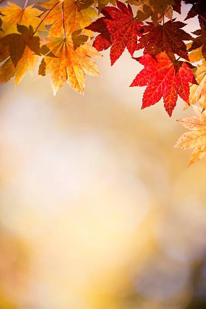 Autumn Leaves:スマホ壁紙(壁紙.com)