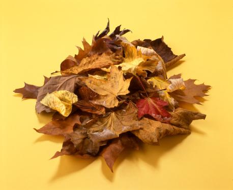 葉「秋の落ち葉」:スマホ壁紙(8)