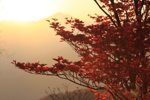 Nikko City「Autumn leaves」:スマホ壁紙(6)