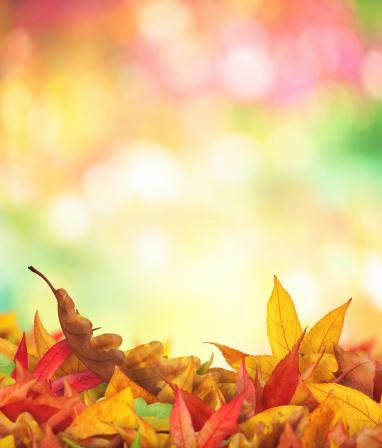 かえでの葉「秋の落ち葉」:スマホ壁紙(7)