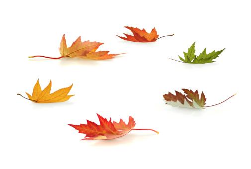 かえでの葉「秋の落ち葉」:スマホ壁紙(10)