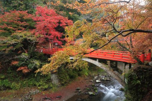 秋+京都「Autumn Leaves and Shigetsu Bridge, Kyoto, Kyoto, Japan」:スマホ壁紙(9)
