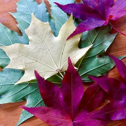 Japanese Maple「Autumn leaves, offbeat color, pop art, graphics」:スマホ壁紙(11)