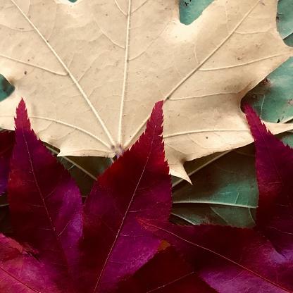 Japanese Maple「Autumn leaves, offbeat color, pop art, graphics」:スマホ壁紙(13)