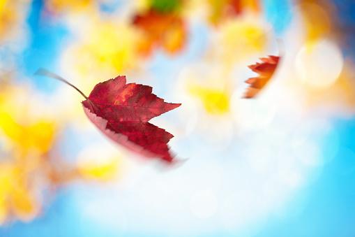 月「秋の落ち葉スピニングのくつろぎ」:スマホ壁紙(16)