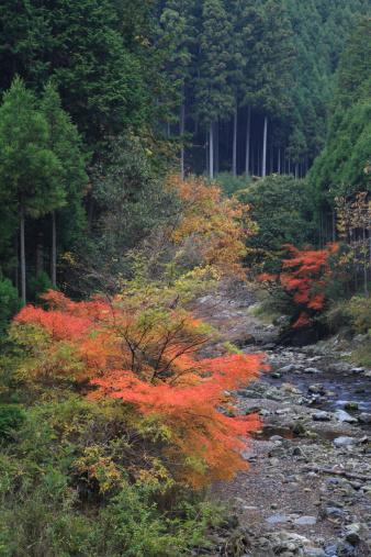 秋+京都「Autumn Leaves and Kiyotaki River, Kyoto, Kyoto, Japan」:スマホ壁紙(11)