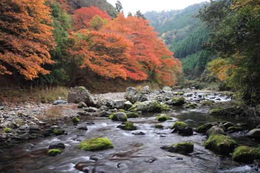 秋+京都「Autumn Leaves and Kiyotaki River, Kyoto, Kyoto, Japan」:スマホ壁紙(10)