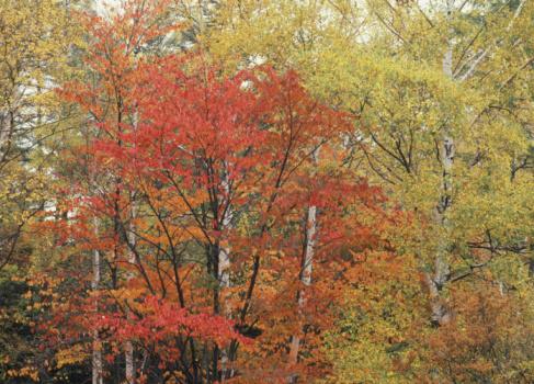 Nikko City「Autumn Leaves」:スマホ壁紙(3)