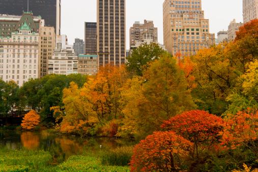 季節「Autumn leaves surrounding the pond at Central Park」:スマホ壁紙(14)