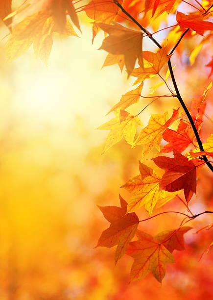 秋の落ち葉:スマホ壁紙(壁紙.com)