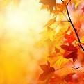 Maple壁紙の画像(壁紙.com)