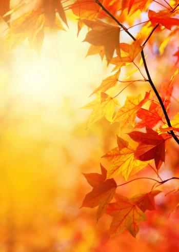 Maple「Autumn Leaves」:スマホ壁紙(9)