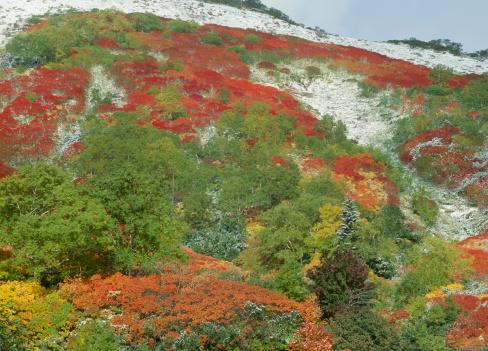 Kamikawa District - Ishikari「Autumn Leaves at Mount Akadake, Kamikawa, Hokkaido, Japan」:スマホ壁紙(11)